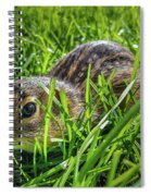 Hiding In The Grass Spiral Notebook