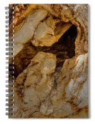Hollow Tree Knot Spiral Notebook