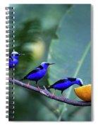 Honeycreeper Buffet Line Spiral Notebook