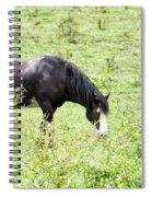 Horse Print 828 Spiral Notebook