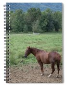 Horse Print 900 Spiral Notebook
