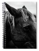 Horse Up-close Spiral Notebook