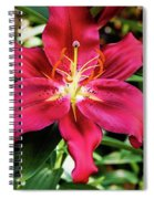Hot Pink Day Lily Spiral Notebook