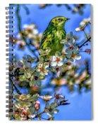 House Finch Spiral Notebook