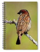 House Sparrow V1818 Spiral Notebook