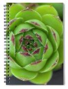 Housleek Close Up Spiral Notebook