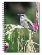 Hummingbird 105 Spiral Notebook