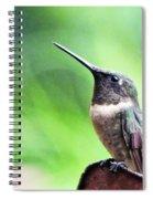 Hummingbird 90 Spiral Notebook