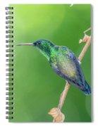 Hummingbird Abyss Spiral Notebook