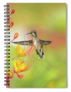 Hummingbird And Pride Of Barbados  Spiral Notebook