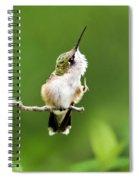 Hummingbird Flexibility Spiral Notebook