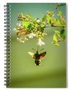 Hummingbird Hawk-moth Spiral Notebook