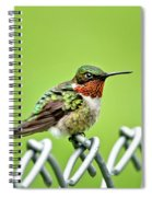 Hummingbird On A Fence Spiral Notebook