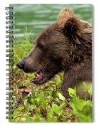 Hungry Bear Spiral Notebook