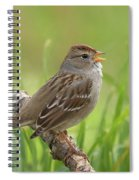immature White-crowned Sparrow Spiral Notebook