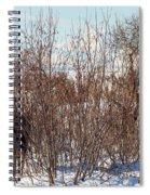 In Ninilchik A Moose Grazes In The Village In Late Winter Spiral Notebook
