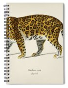 Jaguar  Panthera Onca  Illustrated By Charles Dessalines D' Orbigny  1806-1876  Spiral Notebook