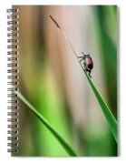 Japanese Beetle Climbs Plant Spiral Notebook