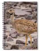 Karoo Korhaan Spiral Notebook