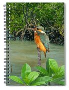 Kingfisher In The Mangroves Spiral Notebook