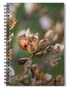 Lady Bird / Lady Bug In Flower Seed Head Spiral Notebook