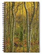 Lemhi Aspens Spiral Notebook