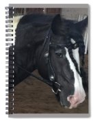 Leo In Braids Spiral Notebook