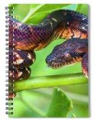 Madagascar Ground Boa Acrantophis Spiral Notebook