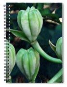 Madonna Lilies Spiral Notebook