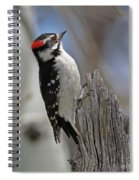 Male Downy Woodpecker Spiral Notebook