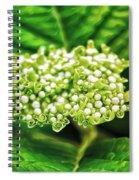 Many Buds Spiral Notebook