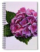 Maroon Hydrangea Spiral Notebook
