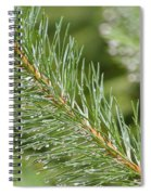Moist Pine Tree Leaves With Water Droplets. Spiral Notebook