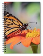 Monarch 2018-25 Spiral Notebook