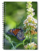 Monarch On White Butterfly Bush Spiral Notebook