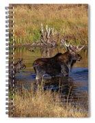 Moose At Green Pond Spiral Notebook