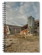 Morgan Horses Pomfret Vermont Spiral Notebook