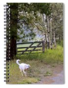 Morning Walk1 Spiral Notebook