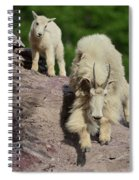 Mountain Goats- Nanny And Kid Spiral Notebook