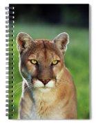 Mountain Lion Felis Concolor, Portrait Spiral Notebook