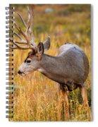 Mule Deer Buck In Rocky Mountain National Park Spiral Notebook