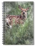 Mule Deer Fawn Spiral Notebook
