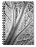 Napa Cabbage 2816 Spiral Notebook
