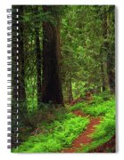 Old Growth Cedars Spiral Notebook