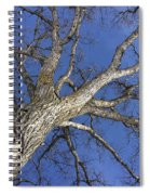 Old Oak Tree Spiral Notebook