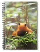 Orange Frog. Spiral Notebook