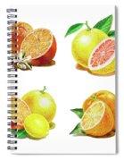 Orange Grapefruit Lemon Watercolor Fruit Illustration Spiral Notebook