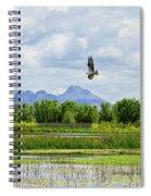 Osprey Over The Wetlands Spiral Notebook