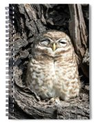 Owl In A Tree Spiral Notebook