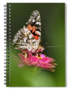 Painted Lady Butterfly At Rest Spiral Notebook